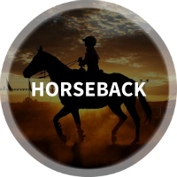 Find Horseback Riding, Equestrian, Horse Stables & Where To Ride Horses in Austin, TX