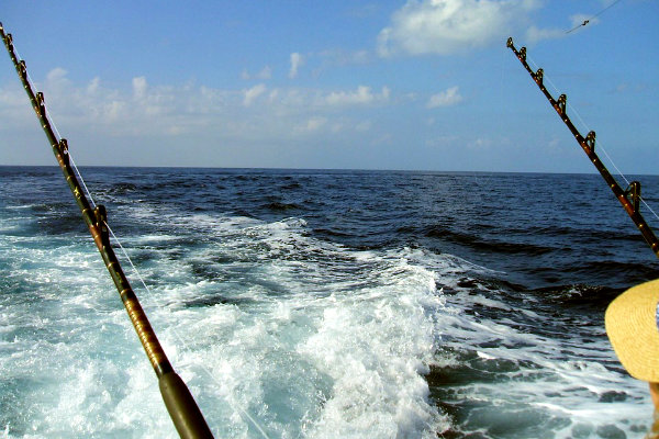 deep sea fishing fish Miami Florida Atlantic Ocean tropical