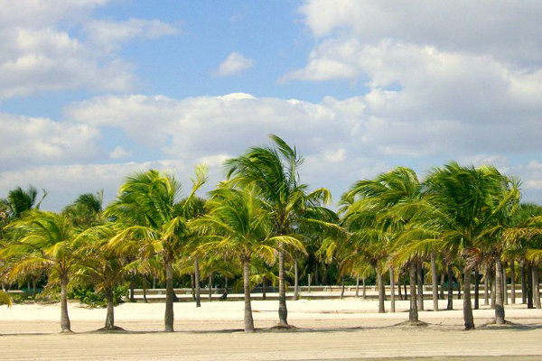 Brandon park Miami Florida coconut grove beach tropical