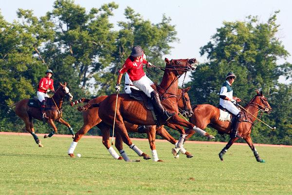 polo horses Miami active cities tournament