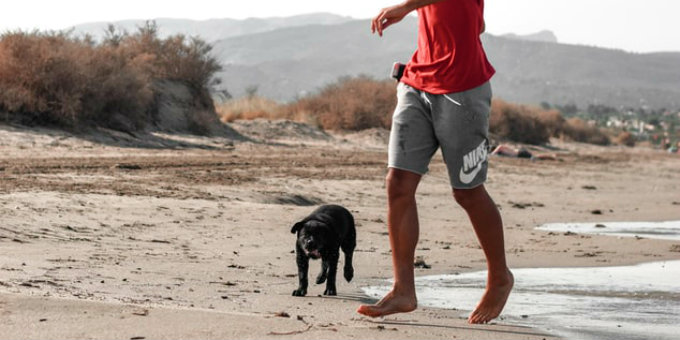 5 Great Dog Parks Along Miami's Oceanfront