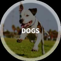 Find Dog Parks, Dog Walkers, Dog Daycare & Pet Resorts