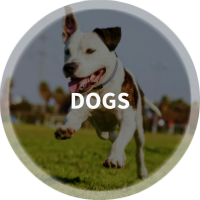 Find Dog Parks, Dog Walkers, Dog Daycare & Pet Resorts in Raleigh-Durham, NC