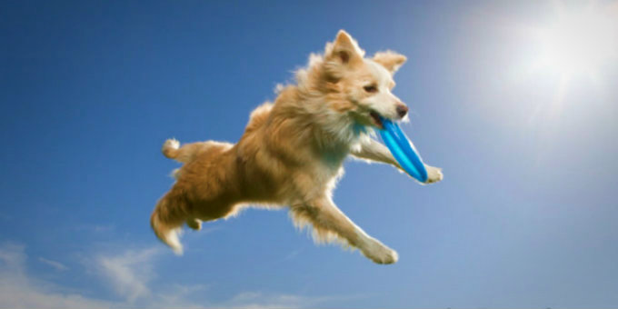 10 Fun Ways (in GIFs) To Be Active With Your Dog